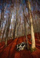 red forest I by adypetrisor