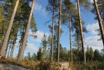 forest from low point of view by purstotahti