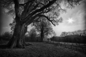 The Old Oak Tree by lichtschrijver