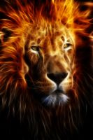 Lion Fire by mceric