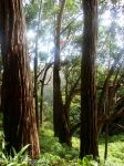 Trees by AllAboutDianne