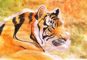 Tiger in watercolour by CsimmBumm
