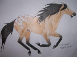 Appaloosa Horse No.2 by Raiha