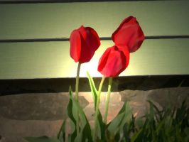 Tulips by sporklover