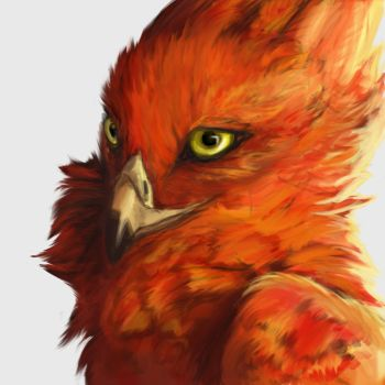 Fire Birb by Felix-Vulpes