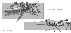 Insects Studies by NOOSBORN