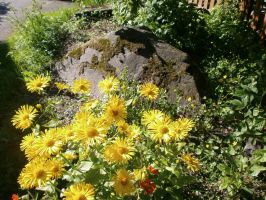 Yellow flowers and a rock by vonderwall