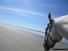 Beach horse by nancy24601