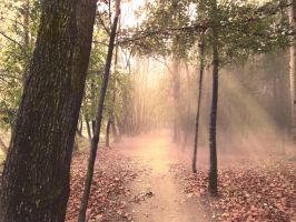 Path in the forest ( day light) Premade by Simbores