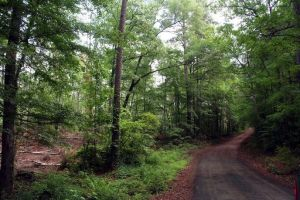 San Augustine County, Texas by timbrian