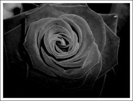 Black Rose by MissSLG
