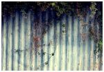 Fence by s3165938