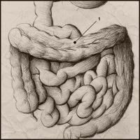 The Intestine by soliton