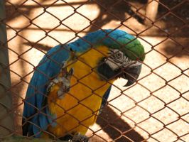 macaw by tariqui