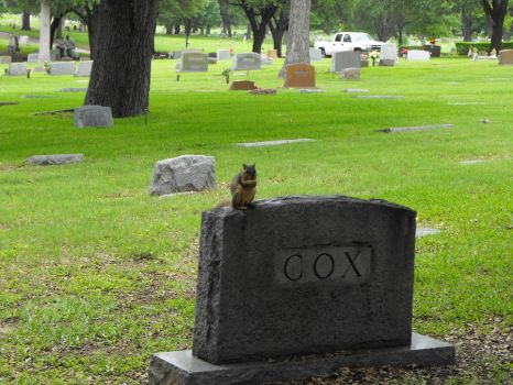 squirrel on cox by dragongod140