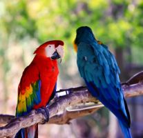 Macaws by orbitingasupernova