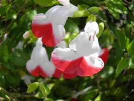 red and white tiny flower by bwall49