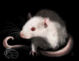 White Rat Portrait Templeton by NadilynBeato