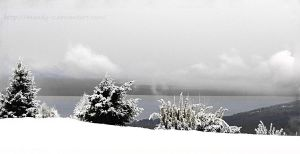 White magical winter by mandy-c