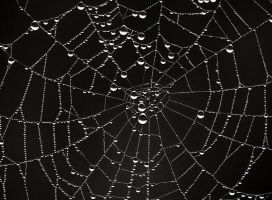 Spider web by MaraDamian