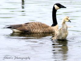 Mama Goose n baby by Sheriannphotography