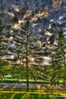 Through the pines by chriskronen