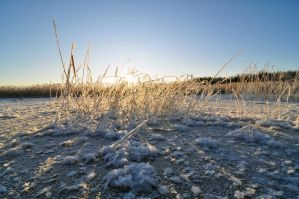 Frosty Day by sudd