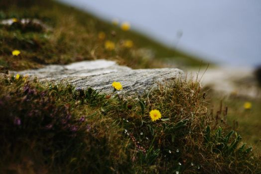 Wild flowers at the shore by bitstarr