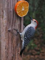 Florida bird feeder by 2blueturtle
