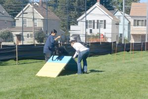 2014 Dog Festival, Try It Dog Obstacles by Miss-Tbones