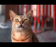 Urban Cats - 56 by MARX77