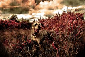 where the dogs roam free by vivylicious