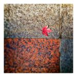 Autumnal Pavement by LEQUARK