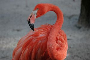 Flamingo by DickPig