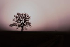 Lonely tree by adamcroh