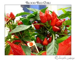 Blood Red Chili by JustLovely