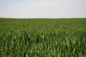 grass_2 by palan-stock