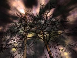 Trees by Musteri