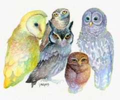 Rainbow Owls by JMagnus