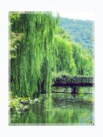 Weeping willow by demeters