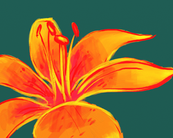 Asiatic Lily by toasthaste