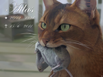In Memory of Atlas. by Alexandoria