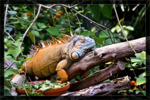 Iguana in the jungle by deaconfrost78