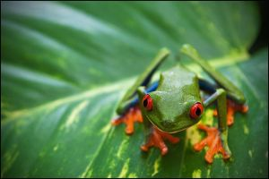 All About a Frog by IgorLaptev