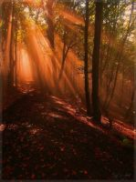 Warm Autumn Light by Weissglut