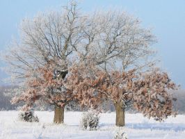 Frosty Oaks by papatheo