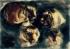 Save The Tigers by DKprints