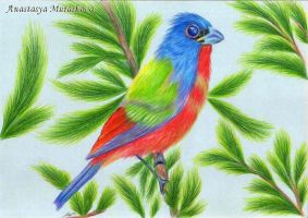 Drawing a bird with colored pencils, using Painted by Anastasya-Murashova