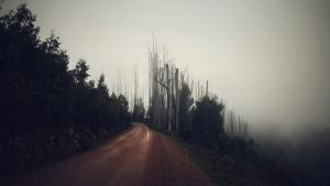 Mountain Road by McKenzie-James