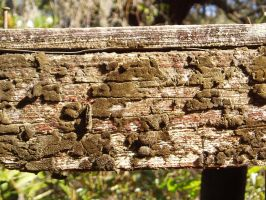 Rotted Mossy Wood by nitch-stock